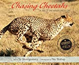 img - for Chasing Cheetahs: The Race to Save Africa's Fastest Cat (Scientists in the Field Series) book / textbook / text book