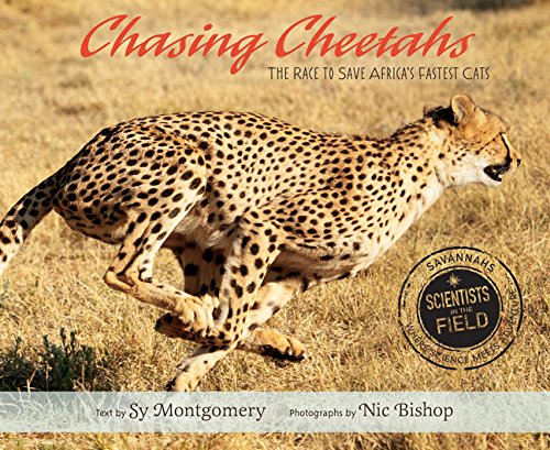 Chasing Cheetahs The Race To Save Africa S Fastest Cat Scientists