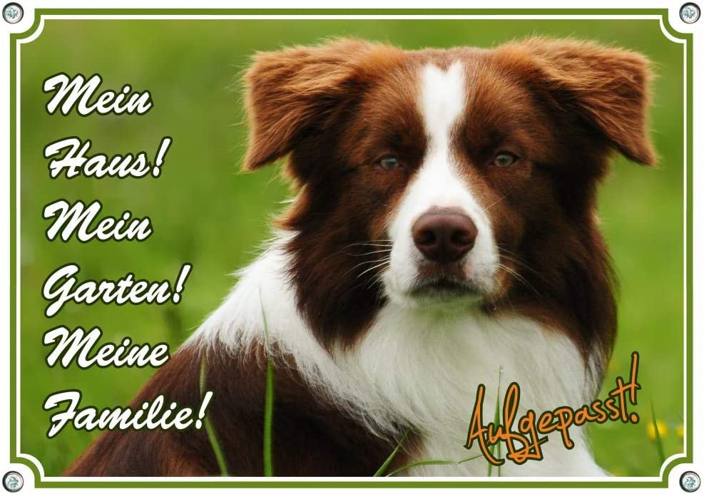 Border Collie Petsigns Hundeschild uv-best/ändgies Metallschild DIN A3