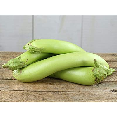 Thai Long Green Eggplant Seeds (40 Seed Pack) : Garden & Outdoor