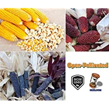 David's Garden Seeds Popcorn Collection SL4345 (Multi) 3 Varieties 400 Seeds (Open Pollinated, Heirloom, Organic)
