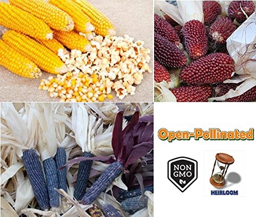David's Garden Seeds Collection Set Popcorn RSL4345 (Multi) 3 Varieties 400 Seeds (Open Pollinated, Heirloom, Organic) - Popcorn Collection