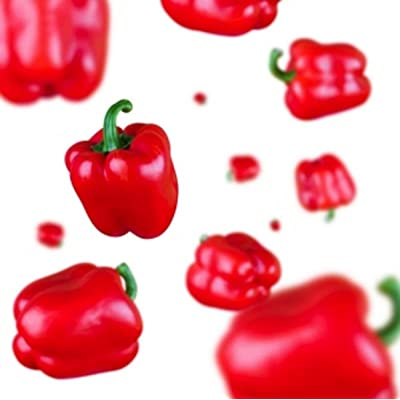 30+ Organic MINI Red Bell Pepper Seed ~ Sweet Garden Veg ~ Rare Exotic Heirloom : Garden & Outdoor