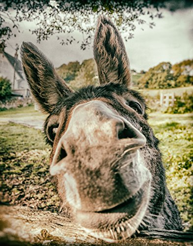 Donkey close up, quirky fun animal photographic print, donkey lover wall art gift (Art Prints Quirky)