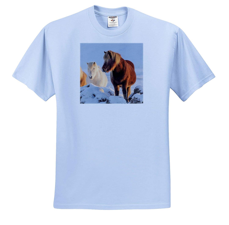 3dRose Danita Delimont Horses Icelandic Horses in South Iceland - Adult T-Shirt XL ts/_313638