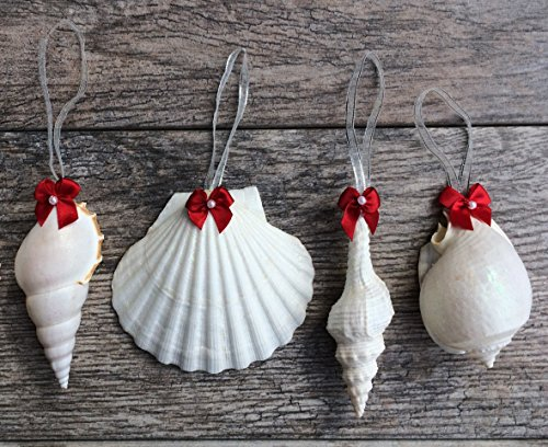 61kg86eF5OL Amazing Seashell Christmas Ornaments