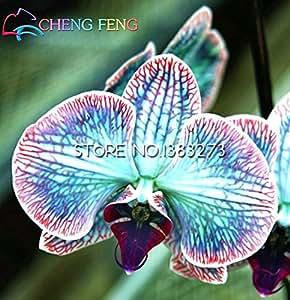 Las plantas ornamentales avanzadas 100 piezas Semillas Semillas raros de la flor del mundo de agua de la mariposa de orquídeas macetas de colores Bonsai Semillas de jardín
