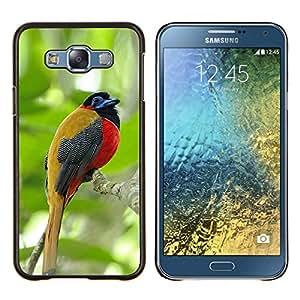 EJOOY---Cubierta de la caja de protección para la piel dura ** Samsung Galaxy E7 E700 ** --pájaro cantante tropical maderas de la selva verde