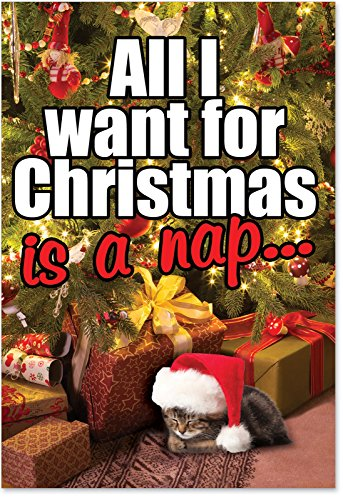 12 'Cat Nap' Boxed Christmas Cards with Envelopes 4.63 x 6.75 inch, Adorable Christmas Kitten Holiday Notes, Hilarious Cute Kitty Cat Christmas Notes, Humorous Christmas Stationery B1124