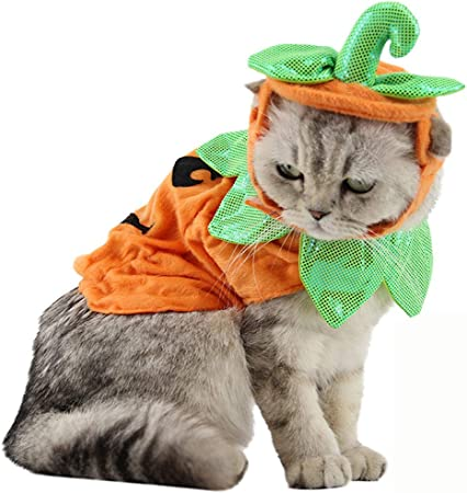 Amazon Com Bolbove Pet Pumpkin Costume For Cats Small Dogs Party Halloween Cosplay Free Size Orange Hat Clothes Pet Supplies