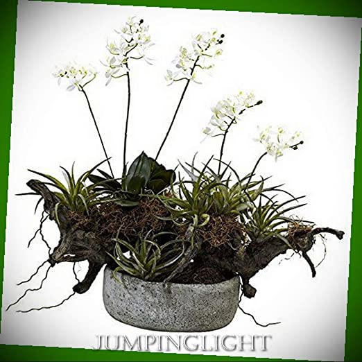 Amazon Com Jumpinglight Orchid Succulent Garden With Driftwood