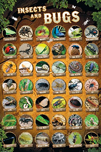 (Insects and Bugs Compilation Collage Decorative Educational Poster Print)