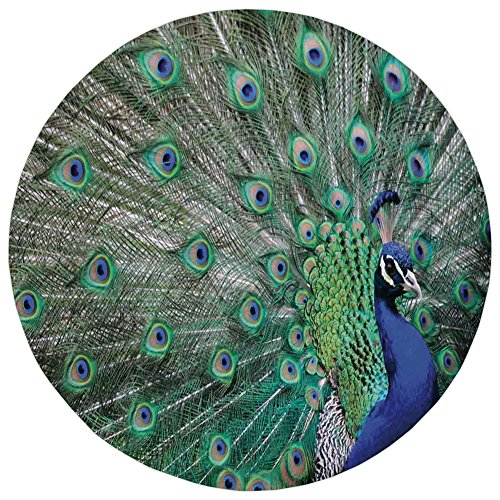 Round Rug Mat Carpet,Peacock,Peacock Displaying Elongated Majestic Feathers Open Wings Picture,Navy Blue Green Light Brown,Flannel Microfiber Non-slip Soft Absorbent,for Kitchen Floor Bathroom (Feathers Peacock Displaying)