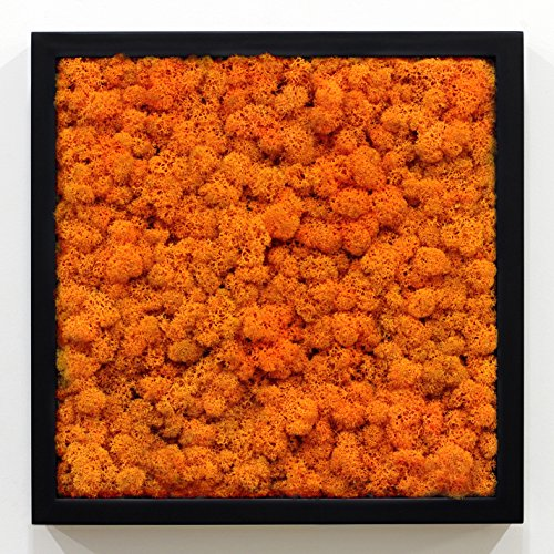 scandia-moss-framo-organic-deodorizing-panel-frame-air-freshener-oxidation-air-sanitizer-autumn-51-b
