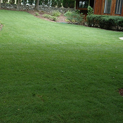 Outsidepride Midnight Kentucky Bluegrass Lawn Grass Seed - 5 LBS by Outsidepride