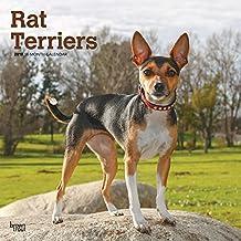Rat Terriers 2019 Calendar