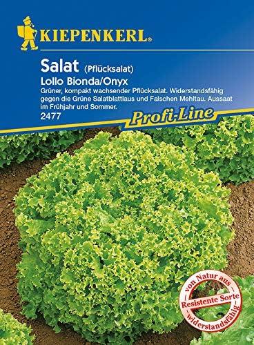 Pflücksalat `Lollo Bionda`Saatband  Saatgut Salat 40221