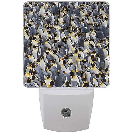 Conjunto de 2 Patrón de colonia de pingüinos rey Polo Sur Animales ...
