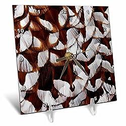 3dRose Danita Delimont - Feathers - Back feathers of Copper Pheasant . - 6x6 Desk Clock (dc_250156_1)