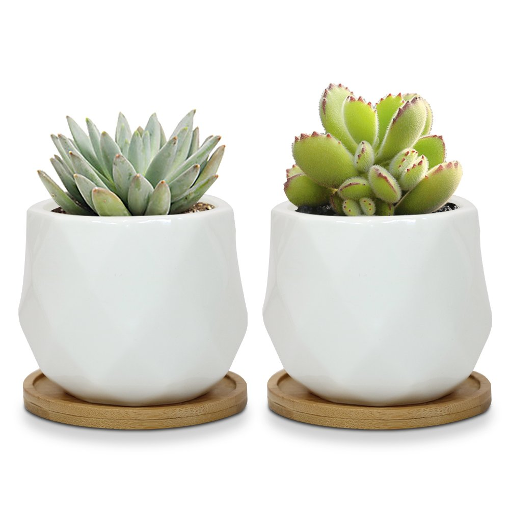 Sqowl 2 Piece 3.2 inch White Ceramic Succulent Planter Pot Modern Cute Small Cactus Herb Flower Planters Set with Bamboo Tray Indoor or Outdoor by Sqowl