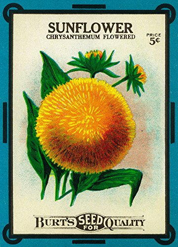 Sunflower Seed Packet SIGNED Print Master Print  Wall Decor  - sunflower wall art