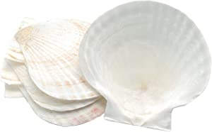 Goldenvalueable Large Natural Baking Shells White Scallops, 4-Inches, Set of 8