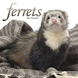 Ferret Calendar - Cute Animals Wall Calendar - Calendars 2016 - 2017 Wall Calendars - Ferrets 16 Month Wall Calendar by Avonside