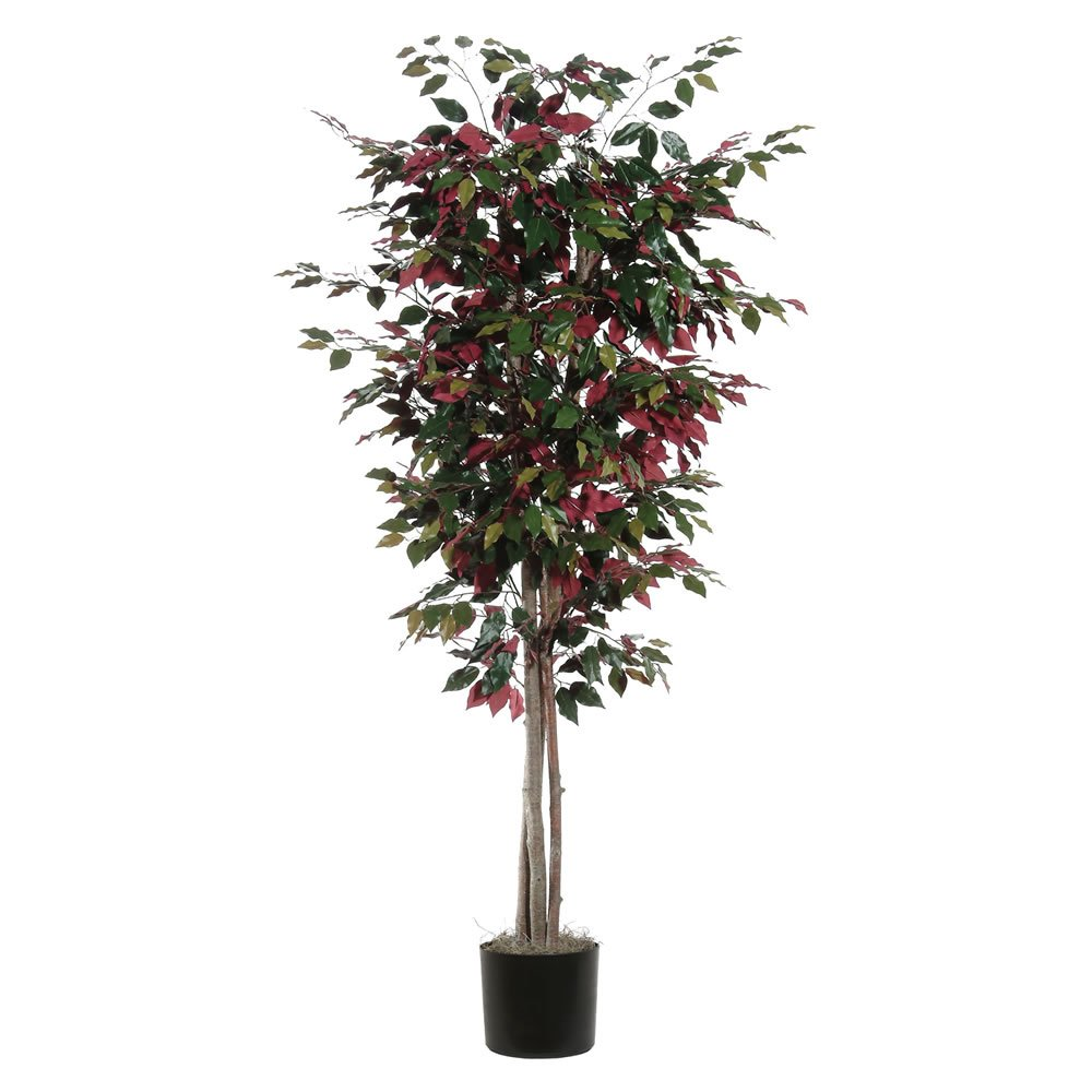 Vickerman TDX0360-07 Everyday Capensia Tree, 6', Green/Red