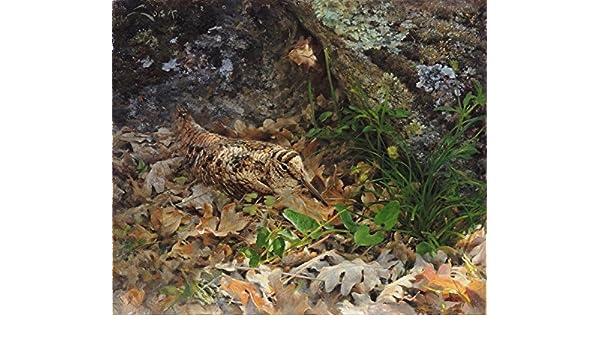 La siega 40x 26 cms Perdiz roja Cuadros de animales aves L/ámina sobre lienzo