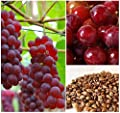 Homegrown Grape Seeds, 20 Seeds, Delicious Red Grape Variety