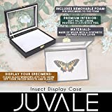Insect Display Case - Bug Display Box with Glass