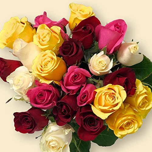 BloomsyBox Two Dozen Mixed Color Rose Bouquet