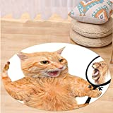 VROSELV Custom carpetKitten A Cat Looking into the Mirror and Seeing a Reflection of a Lion Digital Image for Bedroom Living Room Dorm White and Apricot Round 72 inches