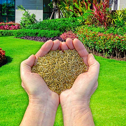 Fast Growing Premium Bio Treated Grass Seed - 1 kg - Covers 35 sqm (380 sq ft)...
