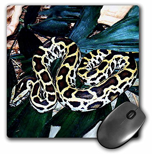 3dRose 8 x 8 x 0.25 Inches Burmese Python Mouse Pad (mp_612_1) ()