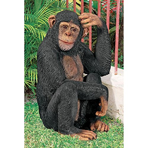 Design Toscano Chauncey the Confused Chimp Garden Monkey Statue, Multicolored ()