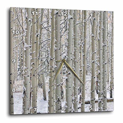 Colorado Rockies Clock - 3dRose Danita Delimont - Forests - Snow covered Aspen grove, Keebler Pass, Rocky Mountains, Colorado - 10x10 Wall Clock (dpp_278821_1)