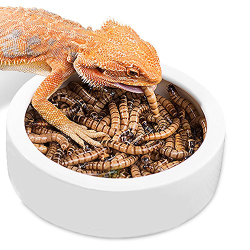 Reptile Food or Water Dish Worm Bowl Ceramic Dish Mealworm Feed Feeder for Lizard Leopard Gecko Lizard Spider Scorpion Crested Gecko Chameleon Corn Snake Centipede Crickets Beetle Jelly Mealworms (Gecko Lizard)