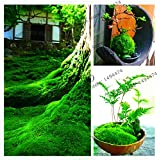100pcs Green Moss Seeds Rare Exotic Bonsai Moss Seeds lovely ,Potted Plant for Decoration Home and Garden