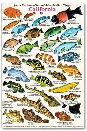 fish chart: Amazon com california and baja fish identification card