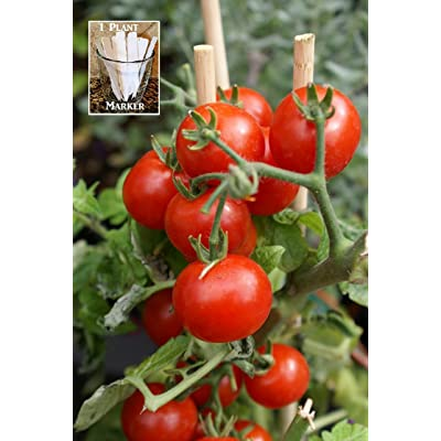Summer Sweet Cherry Tomato Tomato 150 Seeds by Jays Seeds UPC 650327337497 + 1 Free Plant Marker : Garden & Outdoor
