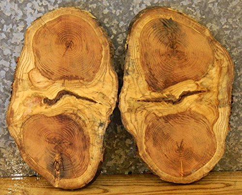 2- Locust Natural Edge Oval Cut Centerpiece/Taxidermy Base Slabs T: 7/8'', W: 11 1/4'', L: 19'' - 12603-12604 by The Lumber Shack