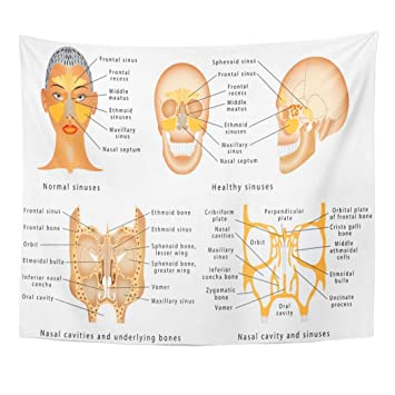 Amazon.com: Emvency Wall Tapestry Sinuses of Nose ... on