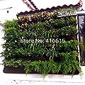 Rostop Black Hanging Grow Bags | 4 Pockets Vertical | Garden Wall-Mounted Indoor Wall Planter