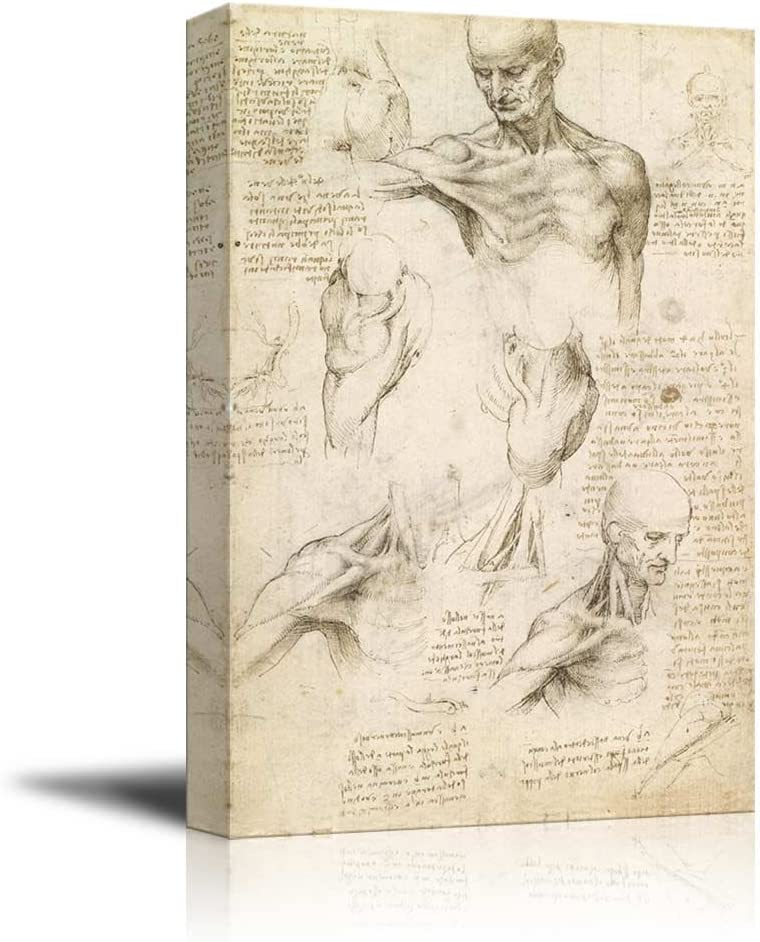 Superficial Anatomy of The Shoulder and Neck by Leonardo da Vinci - Canvas Print Wall Art Famous Oil Painting Reproduction - 16