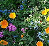 Partial Shade Wildflowers - 25 Varieties and Annual and Perennial Flowering Plants .5 Oz.