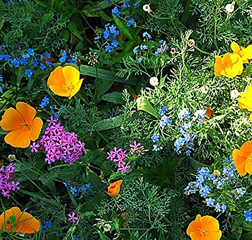 Partial Shade Perennial Flowers - Partial Shade Wildflowers - 25 Varieties and Annual and Perennial Flowering Plants .5 Oz.