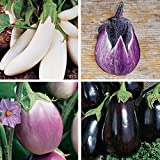 buy Burpee Gourmet Blend Eggplant Seeds 50 seeds now, new 2019-2018 bestseller, review and Photo, best price $7.69