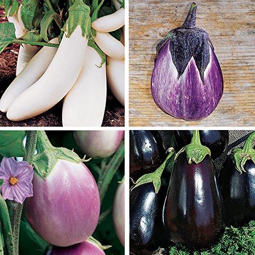 Burpee Gourmet Blend Eggplant Seeds 50 seeds