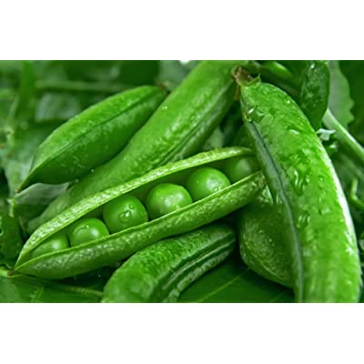"""Green Arrow"" Garden Peas, 50+ Premium Heirloom Seeds, (Isla's Garden Seeds), Non GMO, 90% Germination, Highest Quality Seeds, 100% Pure : Garden & Outdoor"